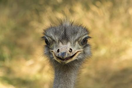 emu: Retrato de Emu con la boca abierta.