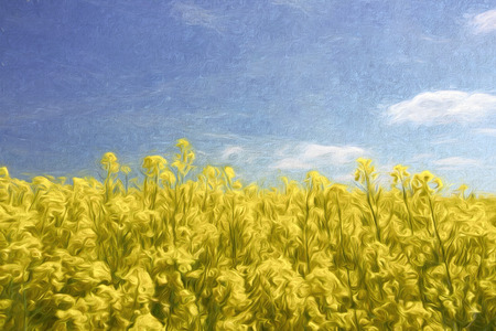 rape: Vivid yellow field against blue sky, digital painting in impressionistic style