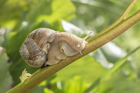 feeler: Macro of snail in the vivid green grass in summer Stock Photo