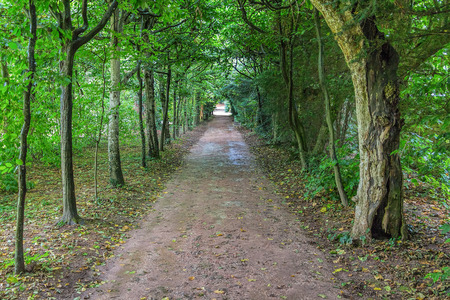 old english: Long dark tree avenue in an old English landscape park with light at the end. Stock Photo