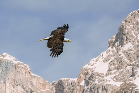 Eagle flying over high rocky mountains and blue sky.