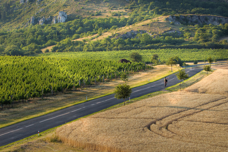 South Moravia landscape, area called Palava or Czech or Moravian Tuscany with country road and vineyard.