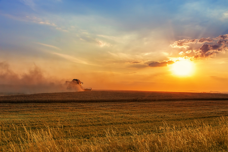 Modern harvest scene, combine harvester raising dust going on large field in colorful dramatic sunset.