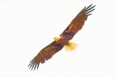 Amerikaanse adelaar vliegt met wijd open vleugels, tekenkunst, concept van dieren in het wild en puur natuur. Stockfoto