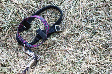 rancher: Closeup view of animal halter with green grass hay background shallow DOF Stock Photo