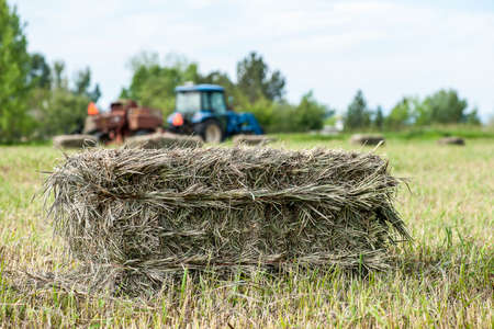 baler: Close-up view of green hay bale with blue tractor and baler in the background, shallow DOF Stock Photo