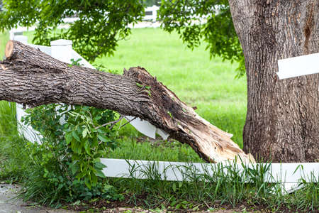 wreckage: Damaged tree wreckage caused from tornado in Larimer Country, Colorado.