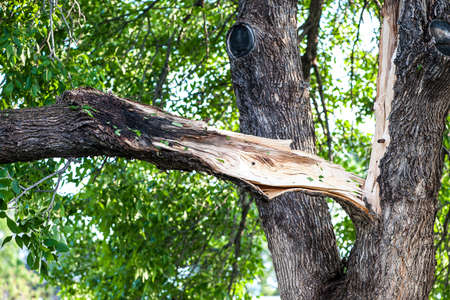 fema: Damaged tree wreckage caused from tornado in Larimer Country, Colorado.