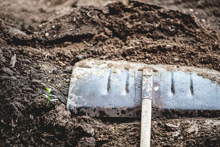 shovel in dirt: Close-up view of vintage gardening shovel on rich, dirt pile, shallow DOF Stock Photo