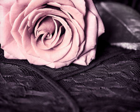 Close-up view of pink vintage rose on black lace, shallow DOF