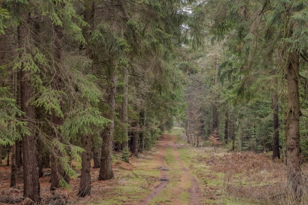 a way leads through the forest photo