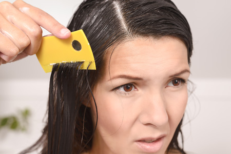 lice: Woman combing out lice in her hair with a lice comb grimacing as she pulls the fine teeth through her long brown tresses to control the contagious infestation of tiny wingless insects