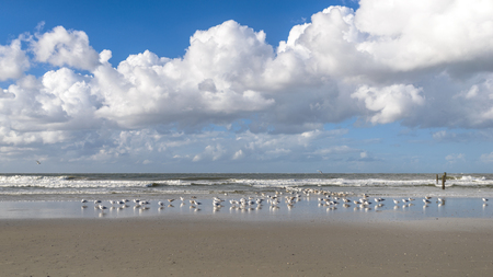 breaking waves: Flock of seagulls standing in the inter tidal region on the wet sand on a tropical beach with breaking waves and white cumulus cloud formations Stock Photo