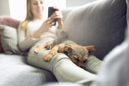 Puppy sleeping on owner laps, while unrecognizable woman in light jeans reading on her smartphone laying on couch at home