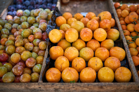 Freshly harvested fruit on sale at the farmers market with assorted colorful plums and clementines in wooden trays Stok Fotoğraf