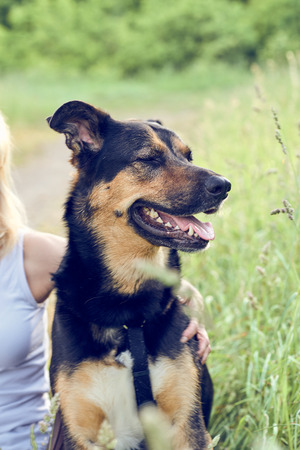 Close up portrait of a happy panting black and tan dog wearing a collar and lead sitting at the side of a rural road with a the hand of a loving female owner around its neck Banco de Imagens - 102477878