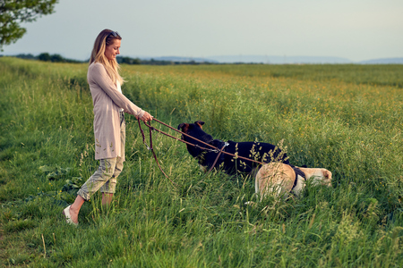 Blond woman walking her dogs at sunset in golden light walking through a lush green field or meadow with long green grass Stockfoto