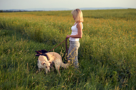 Blond woman walking her dogs at sunset in golden light walking through a lush green field or meadow with long green grass Stock Photo