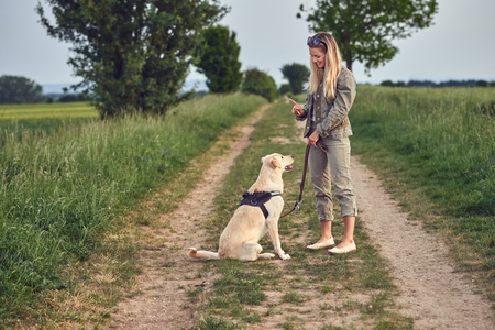 Attractive young woman teaching her dog to an obedient golden Labrador on a walking harness and lead in a country landscape on a farm track 写真素材