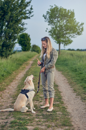 Attractive young woman teaching her dog to an obedient golden Labrador on a walking harness and lead in a country landscape on a farm track Stock Photo