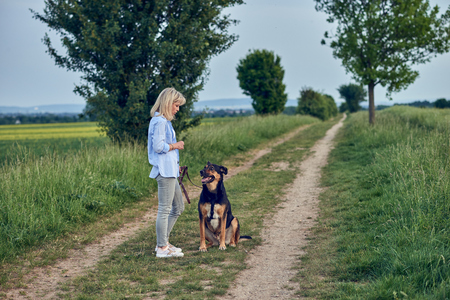 Attractive young woman teaching her dog on a walking harness and lead in a country landscape on a farm track