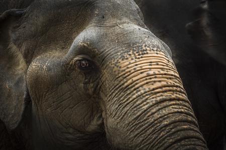 tone: elephants dark tone Stock Photo