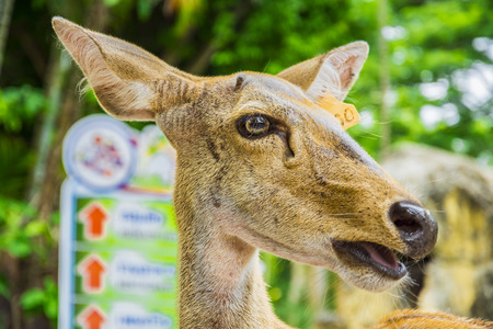 whitetailed: fawn blur background