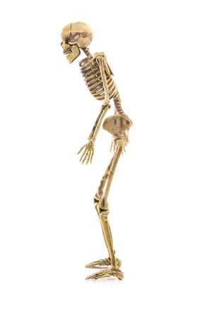 Anatomy Left Side Body Skeleton Human Isolated Stock Photo, Picture ...