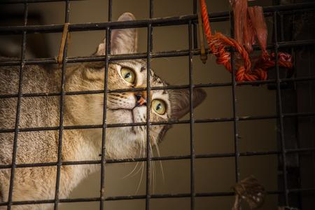 cat in dark cage select focus of eyes