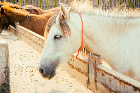 tone: head horse classic tone