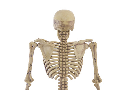 Anatomy Back Upper Body Human Skeleton Isolated Add Clipping.. Stock ...