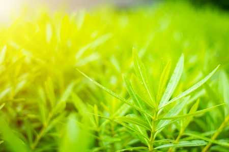 Green leaf grow up with a lot of oxygen and sun flare Stock Photo