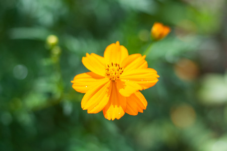 close up yellow beautiful flower and green leaf blur background Stock Photo