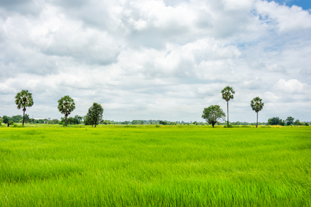 green cornfield and cloudy natural landscape view Stock Photo