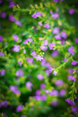 close up purple and green beautiful natural flower blur background