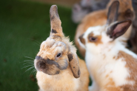 close up little brown rabbits pretty bunny animal