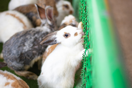 close up eyes rabbit in the cage mammal animal