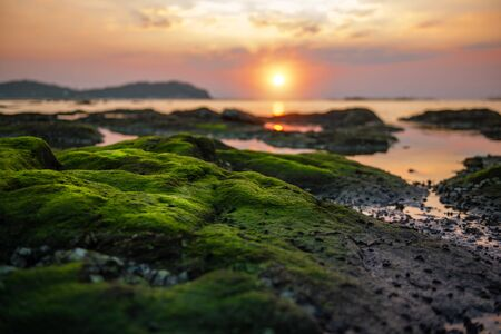 green moss on the reef durinng sunset silhouette natural view