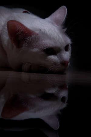white cat in dark room dark concept