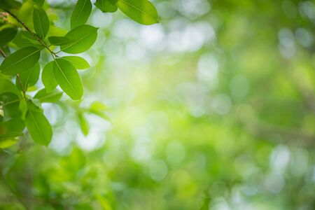 Close up nature view of green leaf on greenery blurred background under sunlight in garden with copy space for text. Natural green plant landscape for ecology and fresh wallpaper concept.