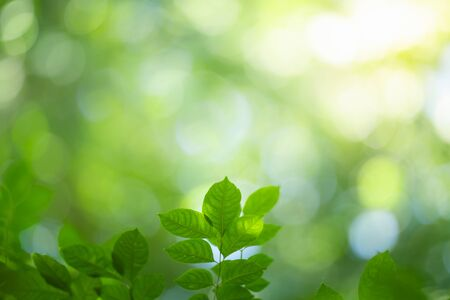 Green nature background. Closeup view of green leaf with beautiful bokeh under sunlight for natural and freshness wallpaper concept.