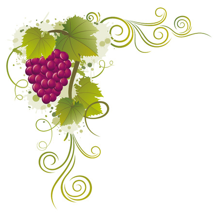 grapevine: grape borders Illustration