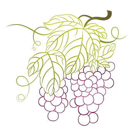 grapes with leaves Stock Vector - 7499538