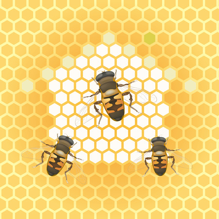 illustration-honey bee and honeycomb Vector