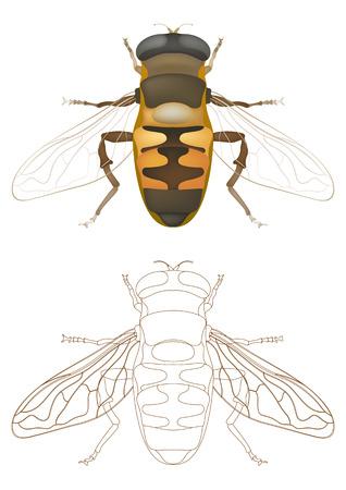 worker bees:  honey bee