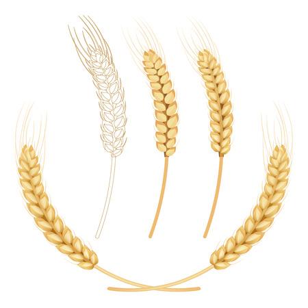 white clip: wheat isolated on white Illustration
