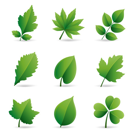 collection of green leaves element Vector