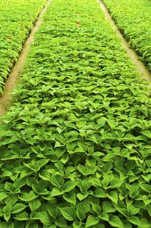 full frame background of fresh plants at spring Stock Photo - 9266045