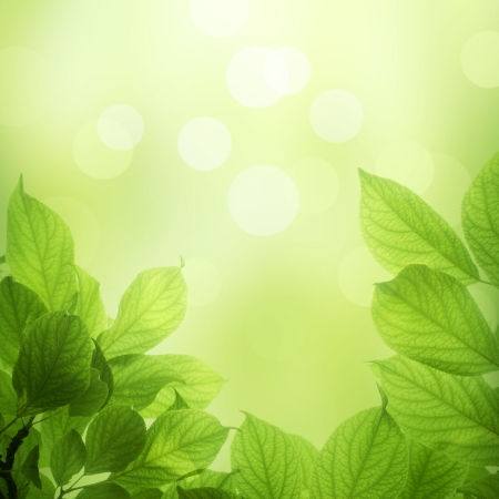beautiful soft green background with beech leaves