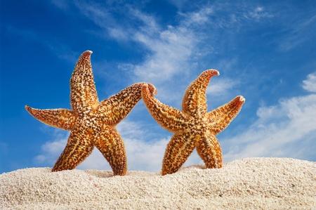 couple of starfish walking on the beach photo